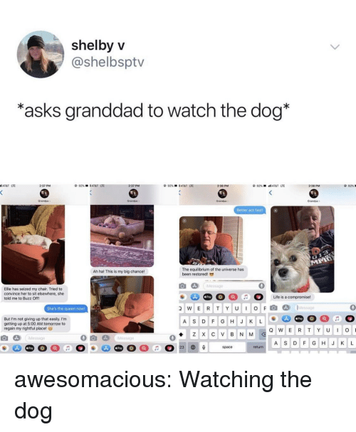 Elsewhere: shelbyV  @shelbsptv  asks granddad to watch the dog*  AT&T LTE  2:37 PM  2:37 PM  92%  l AT&T  UE  2:38 PM  2:38 PM  92%  Grandps  Grandpa  Grandpa  randpa  Better act fast  The equilibrium of the universe has  been restored  Ah ha! This is my big chance!  0  Ellie has seized my chair. Tried to  convince her to sit elsewhere, she  told me to Buzz Off!  Pay  She's the queen noW!  wERTYUIOFl@]  D)  1..tessage  0  But I'm not giving up that easily. I'm  getting up at 5:00 AM tomorrow to  regain my rightful place!  Pay  A S DF GHJ K L  A S DF GHJ K L  Pay  Pay  return awesomacious:  Watching the dog