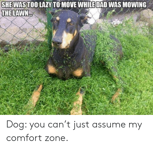 Lawn: SHEWAS TOO LAZY TO MOVE WHILE DAD WAS MOWING  THE LAWN Dog: you can't just assume my comfort zone.