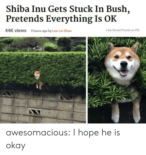 Bored, Tumblr, and Panda: Shiba Inu Gets Stuck In Bush,  Pretends Everything Is OK  44K views  5 hours ago by Low Lai Chow  Like Bored Panda on FB awesomacious:  I hope he is okay
