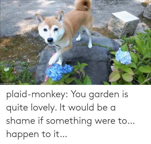 Shame If: SHIBA-INUS plaid-monkey:  You garden is quite lovely. It would be a shame if something were to… happen to it…