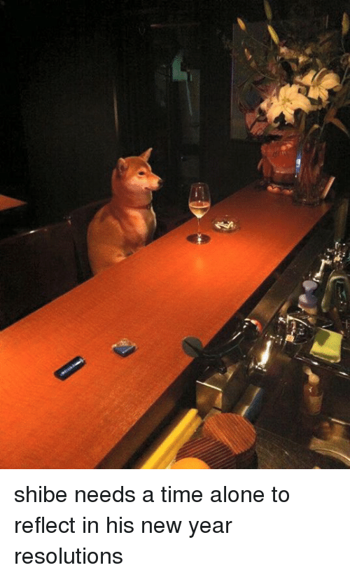 Shibes: shibe needs a time alone to reflect in his new year resolutions
