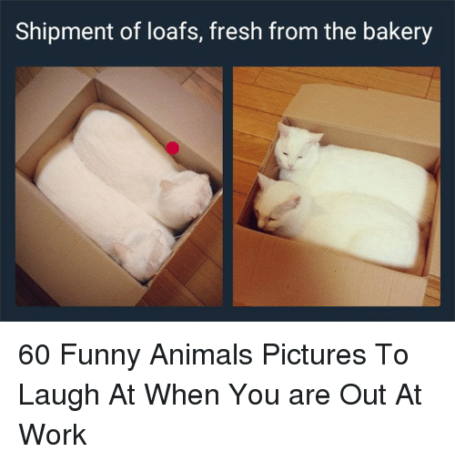 Funny animals: Shipment of loafs, fresh from the bakery 60 Funny Animals Pictures To Laugh At When You are Out At Work