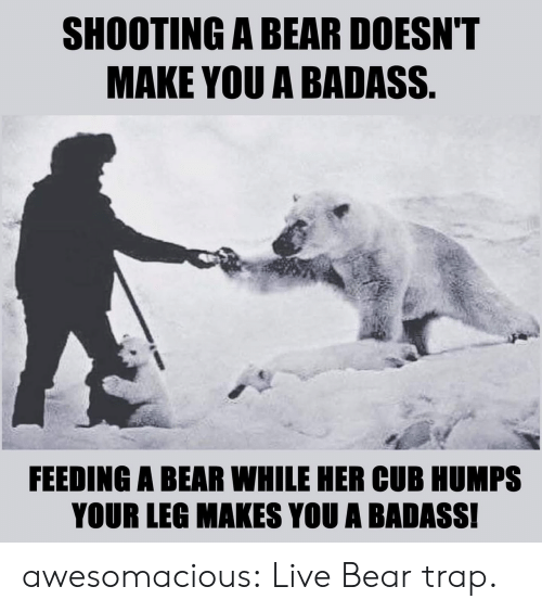 bear trap: SHOOTING A BEAR DOESN'T  MAKE YOU A BADASS.  FEEDING A BEAR WHILE HER CUB HUMPS  YOUR LEG MAKES YOU A BADASS! awesomacious:  Live Bear trap.