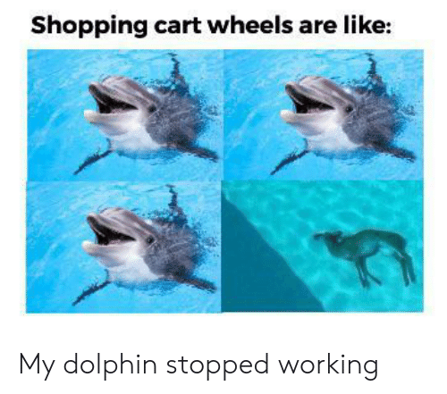 Dolphin: Shopping cart wheels are like: My dolphin stopped working