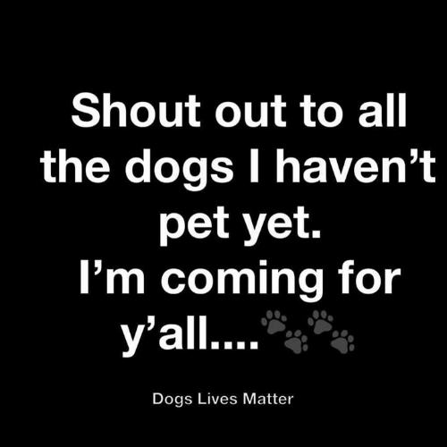 Dogs, Memes, and All The: Shout out to all  the dogs I haven't  pet yet.  I'm coming for  y'all....  Dogs Lives Matter