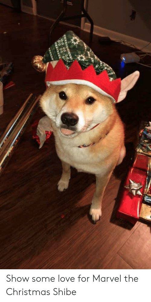 Christmas, Love, and Marvel: Show some love for Marvel the Christmas Shibe