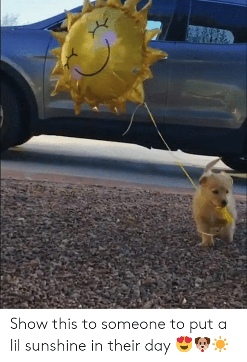 Sunshine, Day, and Show: Show this to someone to put a lil sunshine in their day 😍🐶☀️