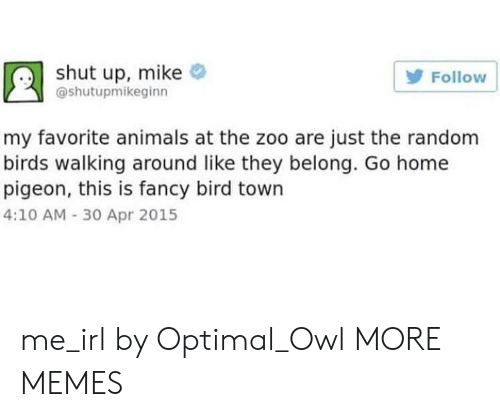 Animals, Dank, and Memes: shut up, mike  Follow  @shutupmikeginn  my favorite animals at the zoo are just the random  birds walking around like they belong. Go home  pigeon, this is fancy bird town  4:10 AM -30 Apr 2015 me_irl by Optimal_Owl MORE MEMES