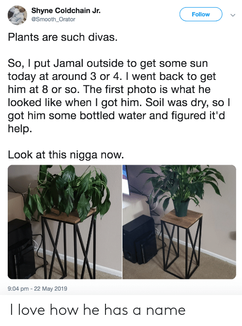 Love, Smooth, and Help: Shyne Coldchain Jr.  Follow  @Smooth_Orator  Plants are such divas.  So, I put Jamal outside to get some sun  today at around 3 or 4. I went back to get  him at 8 or so. The first photo is what he  looked like when I got him. Soil was dry, so I  got him some bottled water and figured it'd  help.  Look at this nigga now.  9:04 pm -22 May 2019 I love how he has a name
