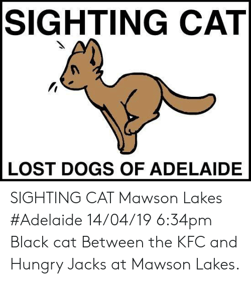 Dogs, Hungry, and Kfc: SIGHTING CAT  LOST DOGS OF ADELAIDE SIGHTING CAT Mawson Lakes #Adelaide 14/04/19 6:34pm Black cat Between the KFC and Hungry Jacks at Mawson Lakes.