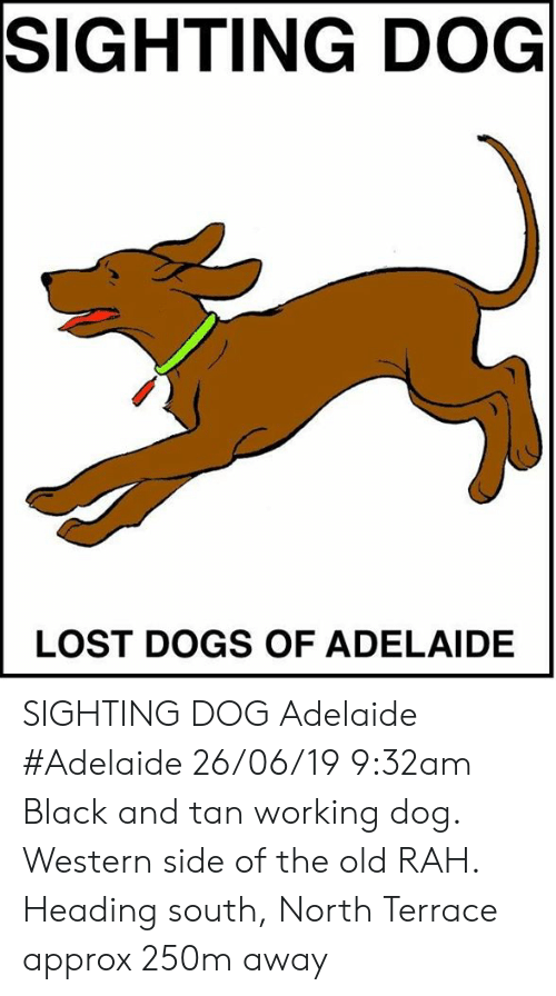 Dogs, Memes, and Lost: SIGHTING DOG  LOST DOGS OF ADELAIDE SIGHTING DOG Adelaide #Adelaide 26/06/19 9:32am Black and tan working dog.  Western side of the old RAH.  Heading south, North Terrace approx 250m away