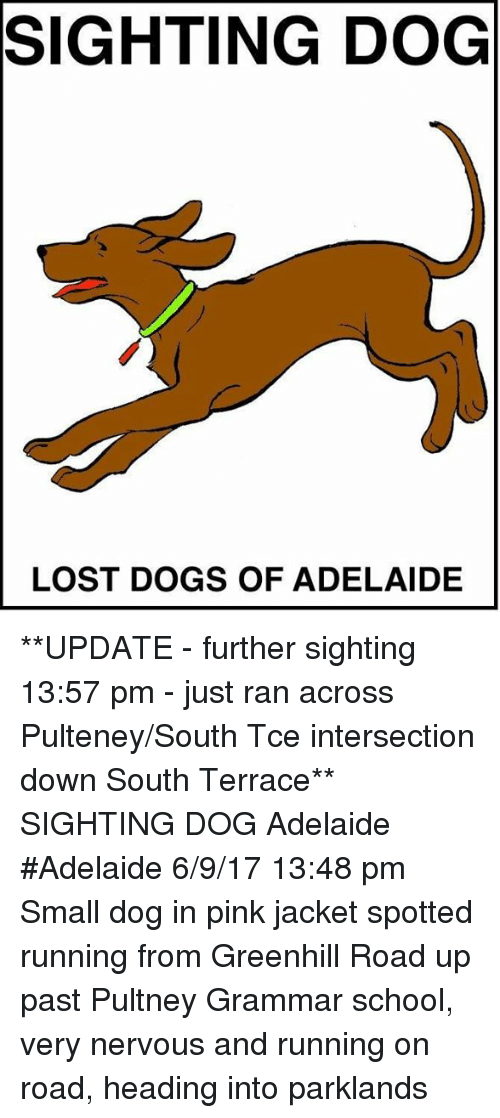 Dogs, Memes, and School: SIGHTING DOG  LOST DOGS OF ADELAIDE **UPDATE - further sighting 13:57 pm - just ran across Pulteney/South Tce intersection down South Terrace**  SIGHTING DOG Adelaide #Adelaide 6/9/17 13:48 pm Small dog in pink jacket spotted running from Greenhill Road up past Pultney Grammar school, very nervous and running on road, heading into parklands