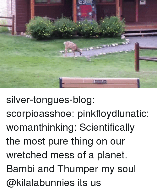 Bambi: silver-tongues-blog:  scorpioasshoe: pinkfloydlunatic:  womanthinking:  Scientifically the most pure thing on our wretched mess of a planet.  Bambi and Thumper  my soul  @kilalabunnies its us