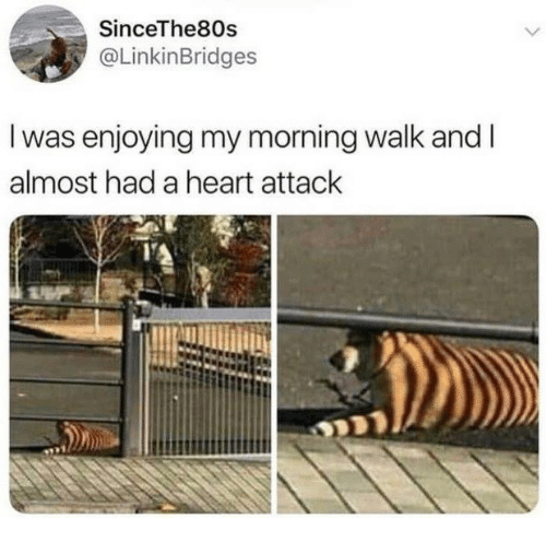 Heart, Heart Attack, and Morning: SinceThe80s  @LinkinBridges  I was enjoying my morning walk and I  almost had a heart attack