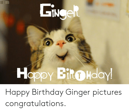 Ginger Pictures: SiNee  Hoppy BitHdaY Happy Birthday Ginger pictures congratulations.