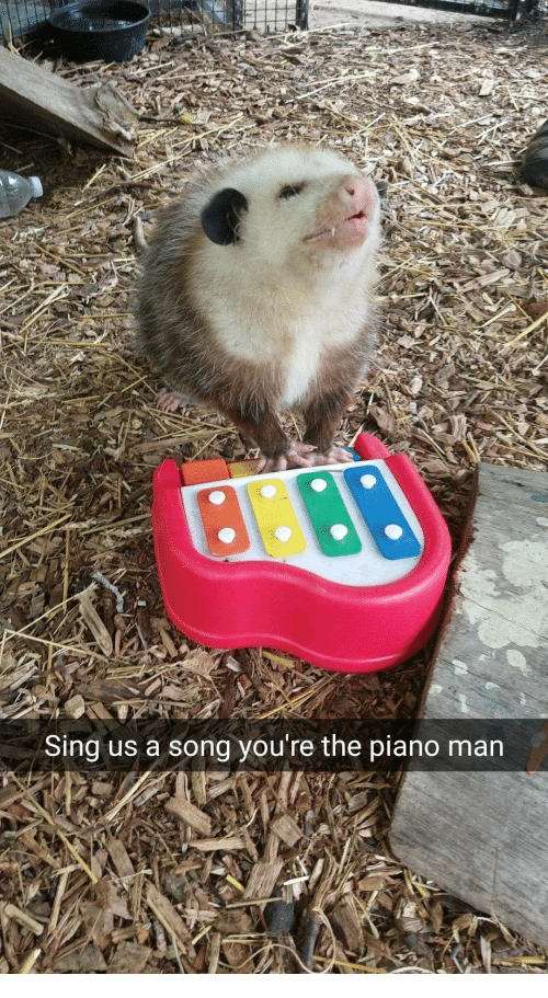 Piano, A Song, and Song: Sing us a song you're the piano man