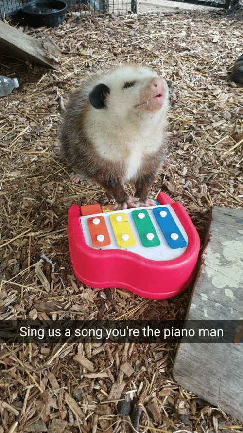piano man: Sing us a song you're the piano man