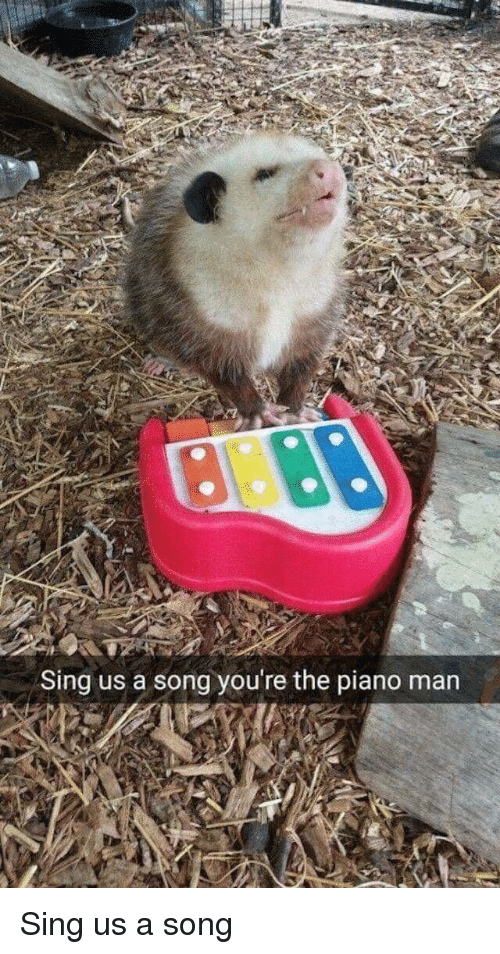 Piano, A Song, and Song: Sing us a song you're the piano man Sing us a song