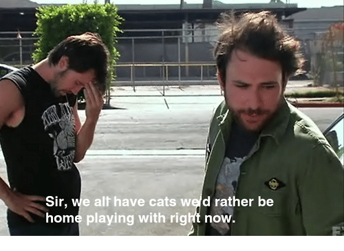 Cats, Memes, and Home: Sir, we alt have cats wed rather be  home playing with right now