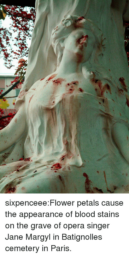 Tumblr, Blog, and Flower: sixpenceee:Flower petals cause the appearance of blood stains on the grave of opera singer Jane Margyl in Batignolles cemetery in Paris.