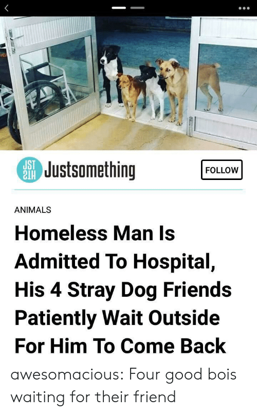 homeless man: SJustsomething  FOLLOW  ANIMALS  Homeless Man Is  Admitted To Hospital,  His 4 Stray Dog Friends  Patiently Wait Outside  For Him To Come Back awesomacious:  Four good bois waiting for their friend