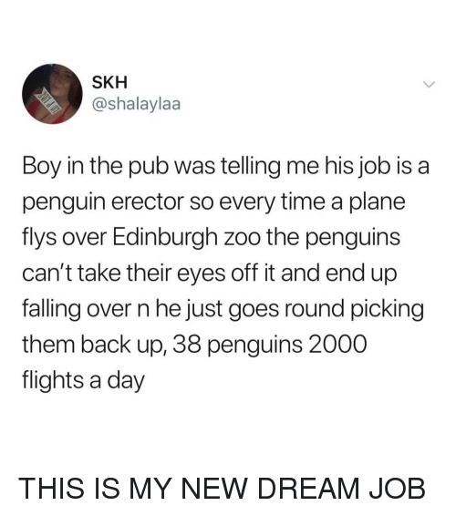 Falling Over: SKH  @shalaylaa  Boy in the pub was telling me his job isa  penguin erector so every time a plane  flys over Edinburgh zoo the penguins  can't take their eyes off it and end up  falling over n he just goes round picking  them back up, 38 penguins 2000  flights a day THIS IS MY NEW DREAM JOB