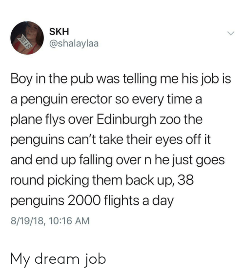 Penguin, Penguins, and Time: SKH  @shalaylaa  Boy in the pub was telling me his job is  a penguin erector so every time a  plane flys over Edinburgh zoo the  penguins can't take their eyes off it  and end up falling over n he just goes  round picking them back up, 38  penguins 2000 flights a day  8/19/18, 10:16 AM My dream job