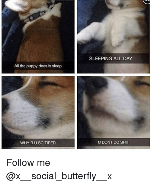 Memes, Shit, and Butterfly: SLEEPING ALL DAY  All the puppy does is sleep  WHY R U SO TIRED  U DONT DO SHIT Follow me @x__social_butterfly__x
