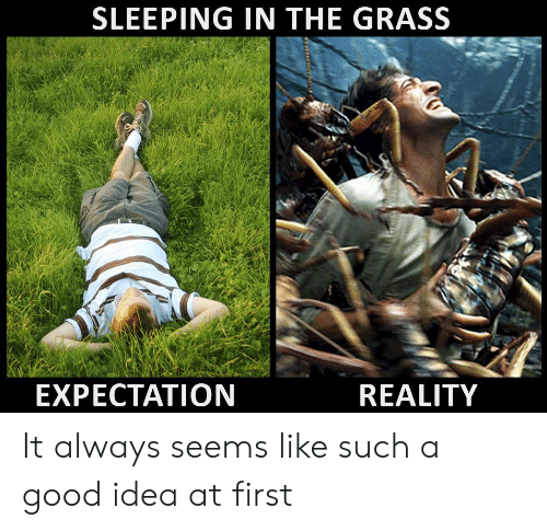 A Good Idea: SLEEPING IN THE GRASS  EXPECTATION  REALITY It always seems like such a good idea at first