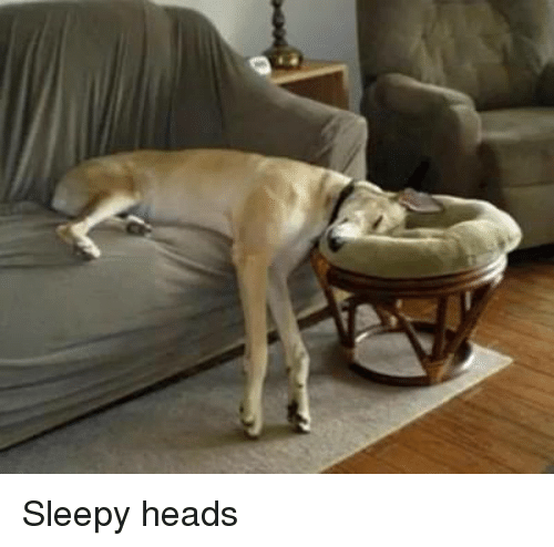 Sleepy Head: Sleepy heads