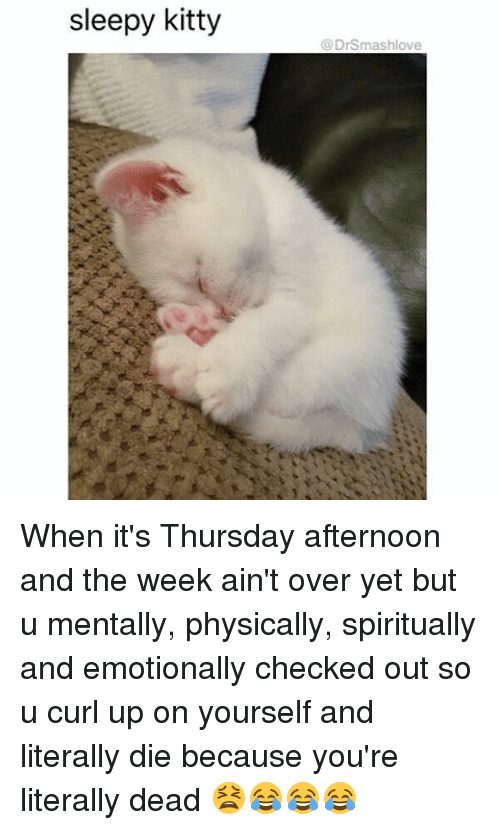 sleepys: sleepy kitty  DrSmashlove When it's Thursday afternoon and the week ain't over yet but u mentally, physically, spiritually and emotionally checked out so u curl up on yourself and literally die because you're literally dead 😫😂😂😂