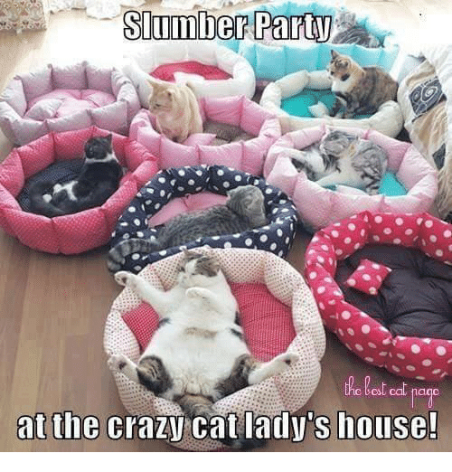 crazy cats: Slumber Party  at the  crazy cat lady's house!
