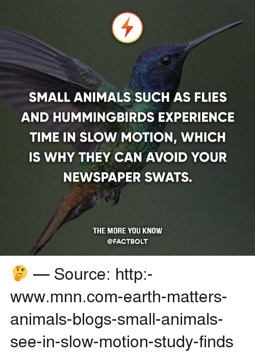 Hummingbirds: SMALL ANIMALS SUCH AS FLIES  AND HUMMINGBIRDS EXPERIENCE  TIME IN SLOW MOTION, WHICH  IS WHY THEY CAN AVOID YOUR  NEWSPAPER SWATS.  THE MORE YOU KNOW  @FACT BOLT 🤔 — Source: http:-www.mnn.com-earth-matters-animals-blogs-small-animals-see-in-slow-motion-study-finds