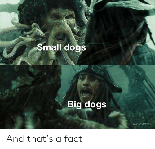small dogs: Small dogs  Big dogs  u/slim2297 And that's a fact
