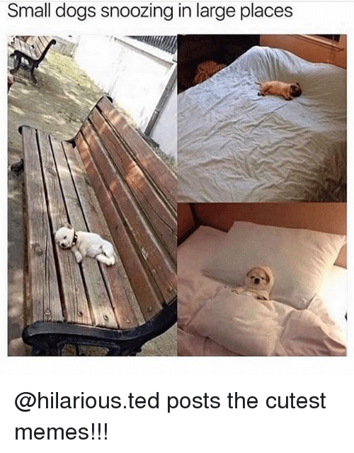 Dogs, Memes, and Ted: Small dogs snoozing in large places @hilarious.ted posts the cutest memes!!!