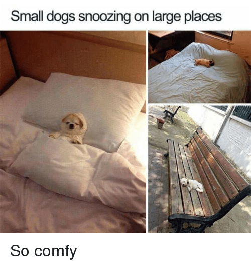 small dogs: Small dogs snoozing on large places <p>So comfy</p>