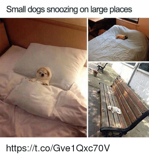 Dogs, Memes, and 🤖: Small dogs snoozing on large places https://t.co/Gve1Qxc70V