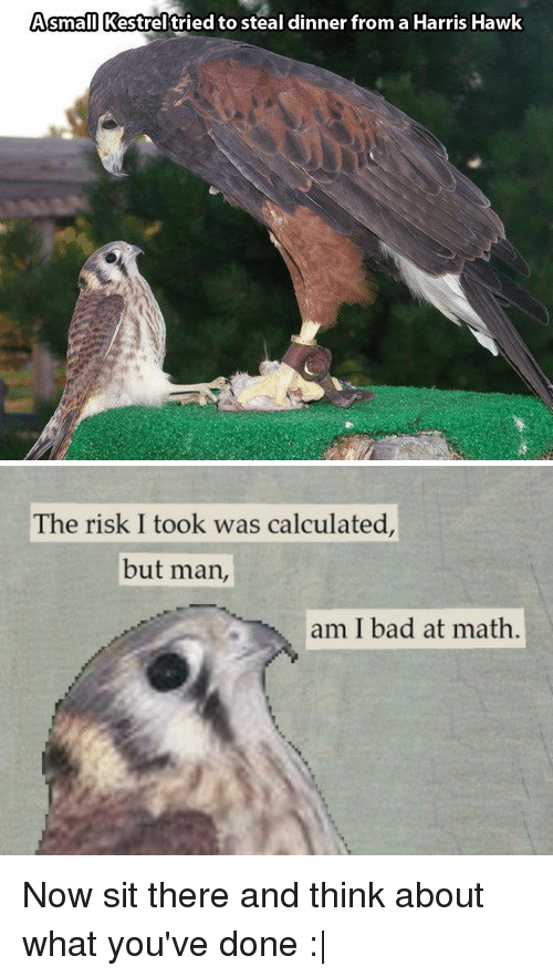 The Risk I Took Was Calculated But Man Am I Bad At Math