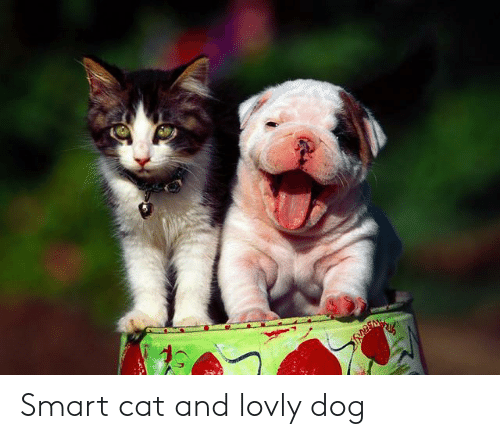 Smart Cat: Smart cat and lovly dog