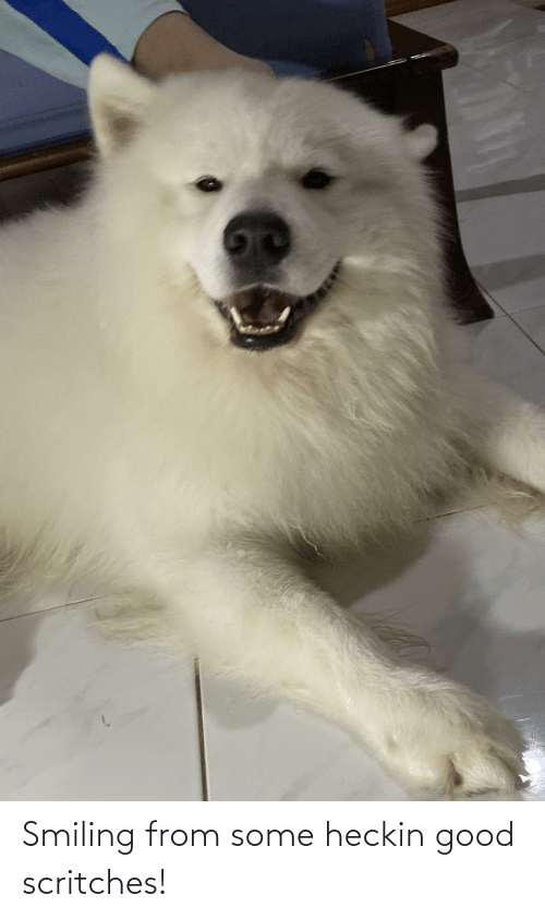 Heckin Good: Smiling from some heckin good scritches!