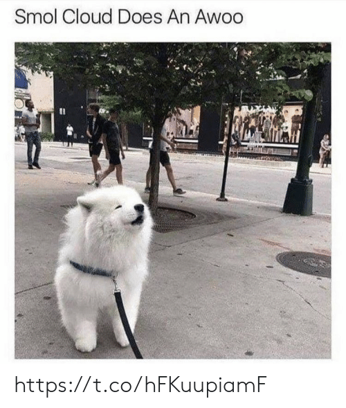 Memes, Cloud, and 🤖: Smol Cloud Does An Awoo https://t.co/hFKuupiamF