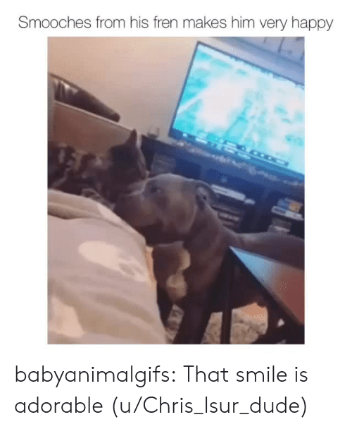 Dude, Tumblr, and Blog: Smooches from his fren makes him very happy babyanimalgifs:  That smile is adorable (u/Chris_lsur_dude)