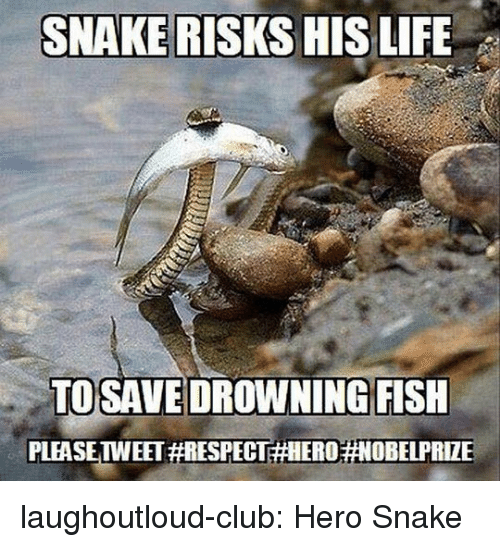 Club, Respect, and Tumblr: SNAKE RISKS HISLIFE  TOSAVE DROWNING FISH  PLEASETWEET laughoutloud-club:  Hero Snake