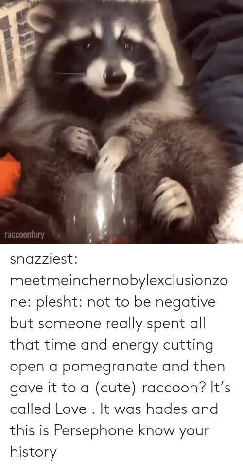 Negative: snazziest:  meetmeinchernobylexclusionzone:  plesht: not to be negative but someone really spent all that time and energy cutting open a pomegranate and then gave it to a (cute) raccoon? It's called Love .   It was hades and this is Persephone know your history