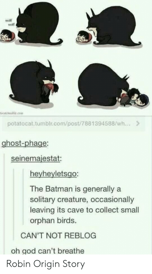 origin story: sniff  sniff  tocat tmublr.cem  potatocat.tumblr.com/post/7881394588/wh...>  ghost-phage  seinemaiestat  heyheyletsgo:  The Batman is generally a  solitary creature, occasionally  leaving its cave to collect small  orphan birds.  CAN'T NOT REBLOG  oh god can't breathe Robin Origin Story