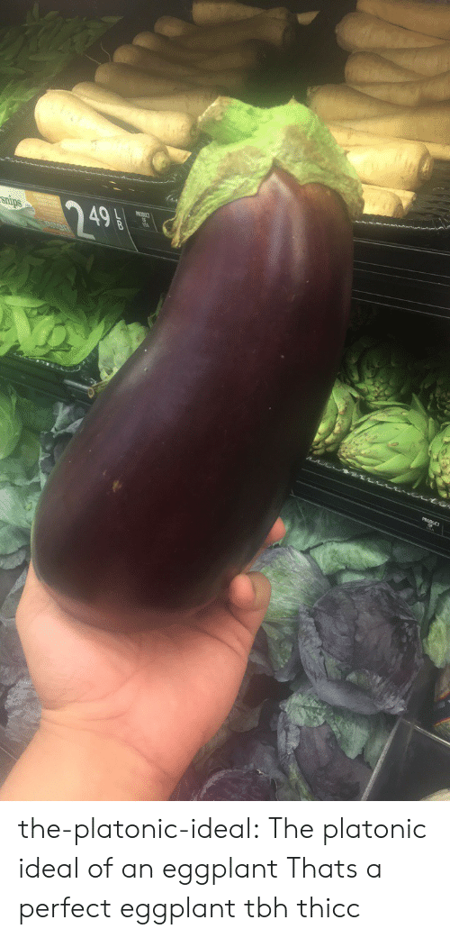 eggplant: snips  249 the-platonic-ideal:  The platonic ideal of an eggplant  Thats a perfect eggplant tbh thicc