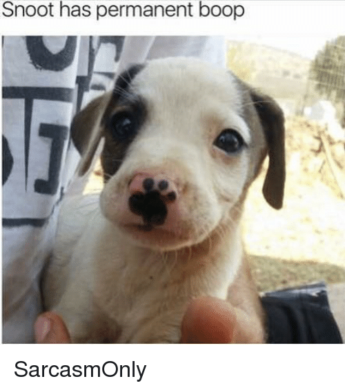 Funny, Memes, and Boop: Snoot has permanent boop SarcasmOnly