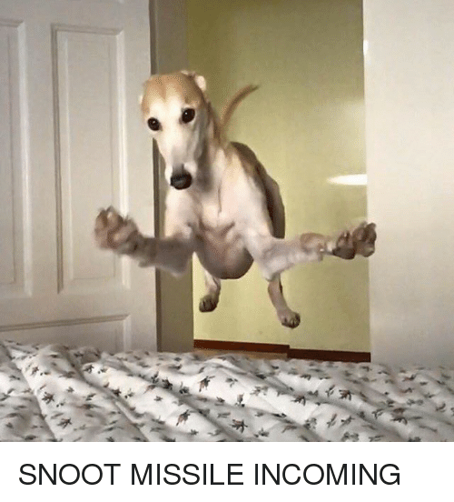 Dank, 🤖, and Snoot: SNOOT MISSILE INCOMING