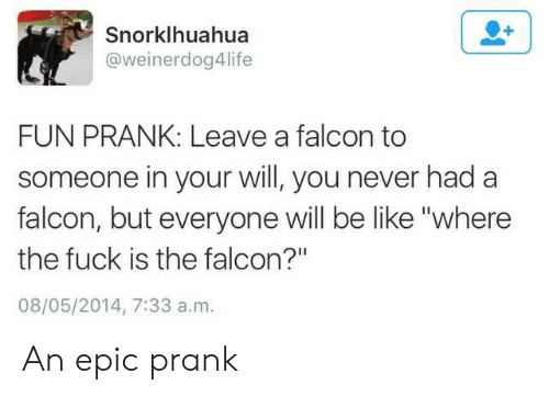 """Be Like, Prank, and Fuck: Snorklhuahua  @weinerdog4life  FUN PRANK: Leave a falcon to  someone in your will, you never had a  falcon, but everyone will be like """"where  the fuck is the falcon?""""  08/05/2014, 7:33 a.m. An epic prank"""