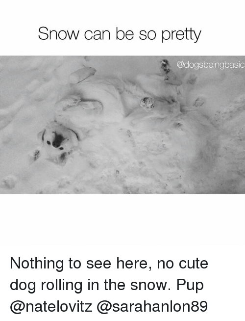 cute dogs: Snow can be so pretty  @dogsbeingbasic Nothing to see here, no cute dog rolling in the snow. Pup @natelovitz @sarahanlon89